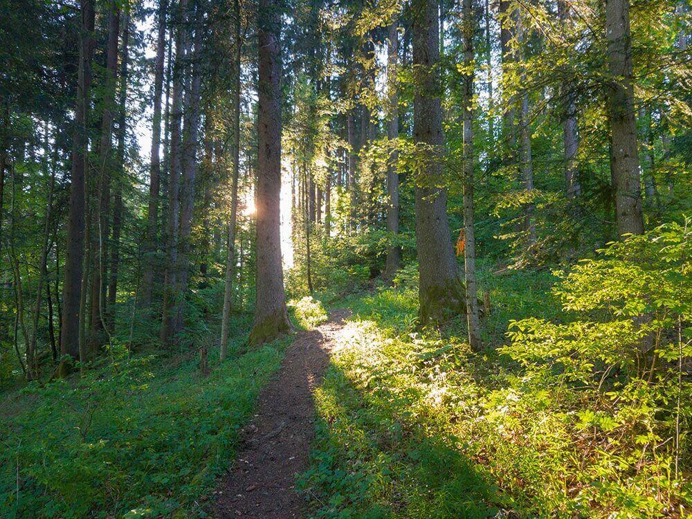 Photo chemin dans la forêt parcours La Découverte UTJB