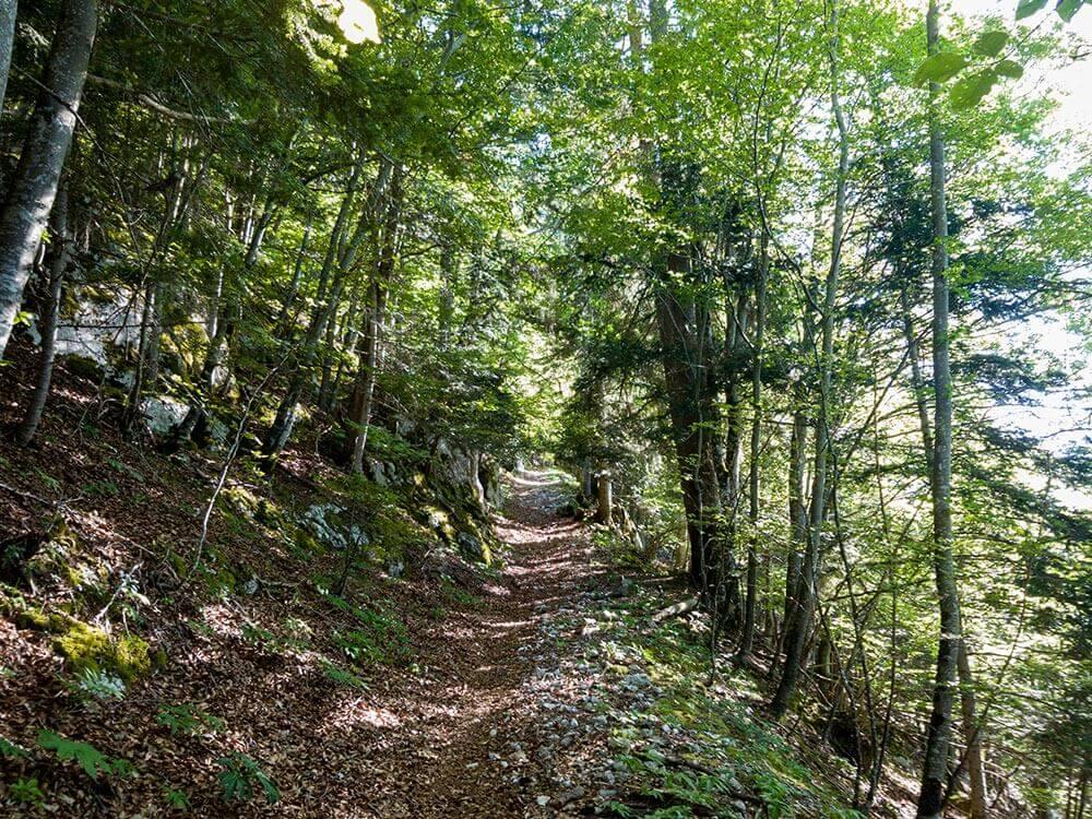 photo sentier pédestre forêt parcours La Traversée UTJB